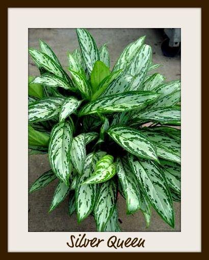 Indoor plants low light indoor plants earth style for Plants low light indoor