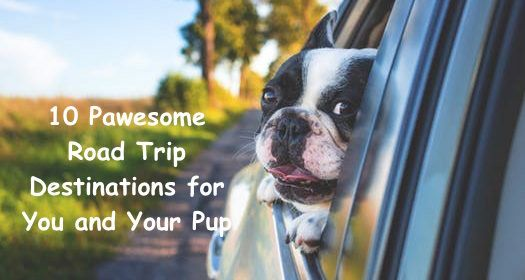 10 Pawesome Road Trip Destinations For You And Your Pup Roadtrip