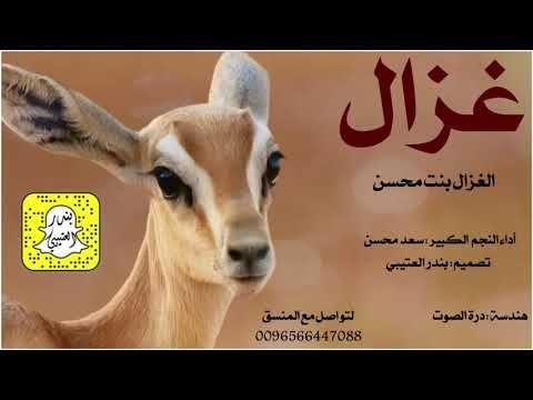 تحميل Mp3 شيلة الغزال اداء سعد محسن 2020 Animals Goats
