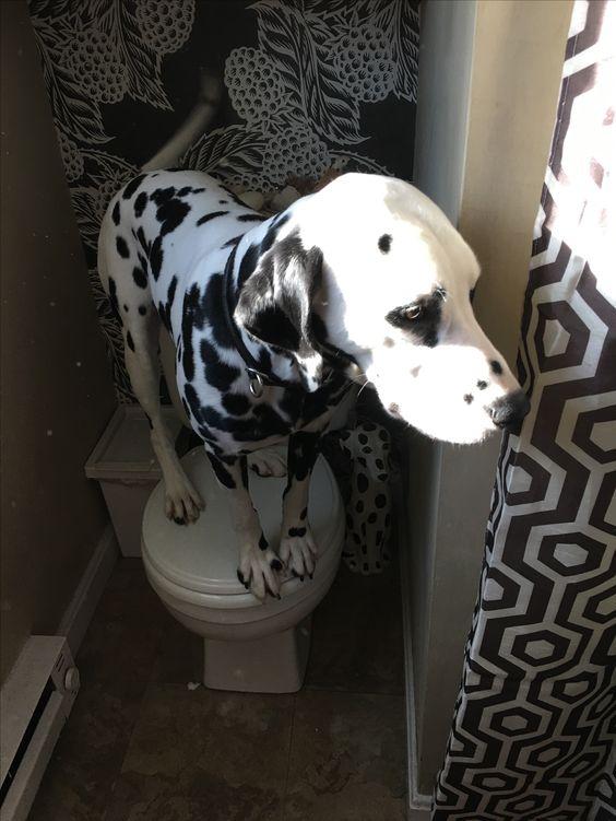 Putting toilet to good use.