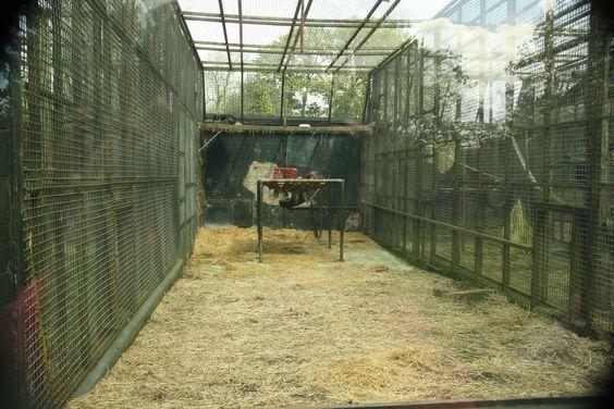 This broke my heart - Chimp enclosure