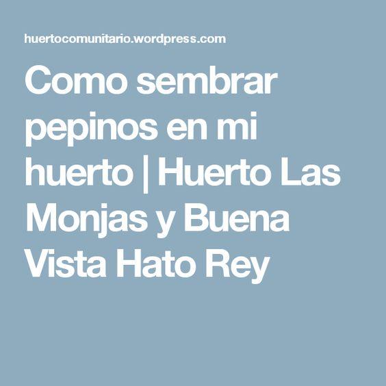 Como sembrar pepinos en mi huerto | Huerto Las Monjas y Buena Vista Hato Rey