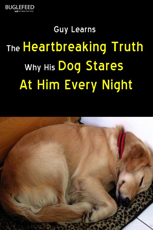 Recently A Chinese Netizen Had Adopted A Golden Retriever From An