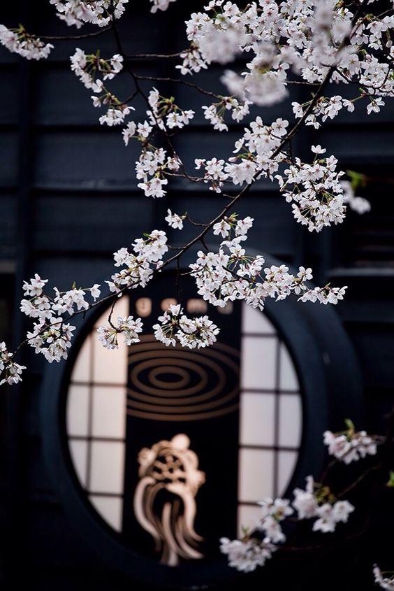 shinjihi: Beautiful Japan 日本の美しい風景