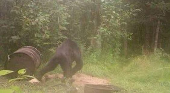 Michigan, Bigfoot et photo…