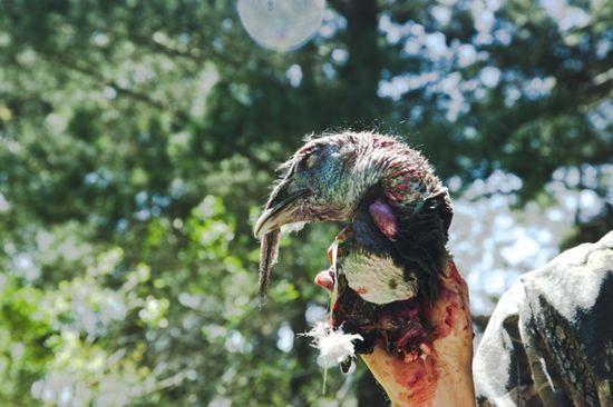 How To Field Dress And Butcher A Turkey Georgiapellegrini Com Field Turkey Stock Recipe Outdoor Adventure