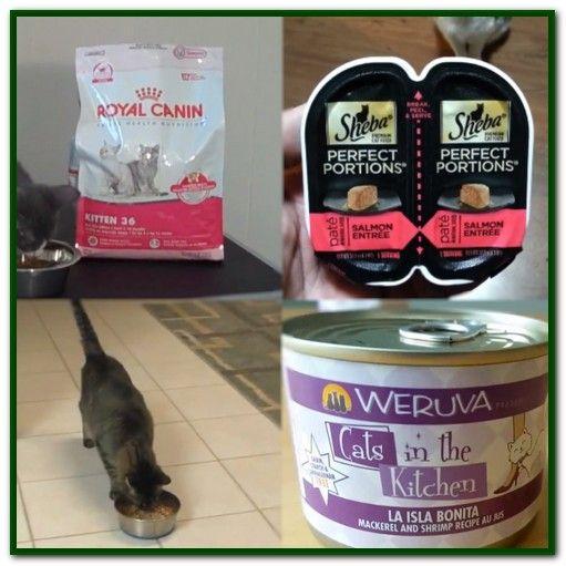 Best Wet Cat Food For Older Cats Sensitive Stomach Cat Food Dry Cat Food Wet Cat Food