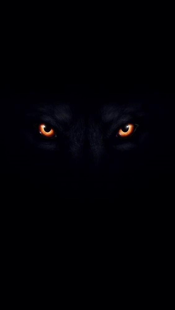 Hai mai guardato un predatore negli occhi