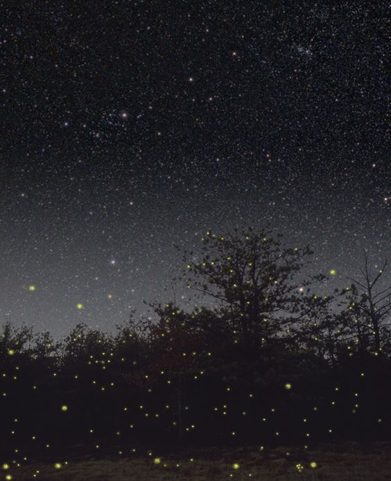 Google Image Result for http://www.moonitude.com/storage/fireflies1.jpg?__SQUARESPACE_CACHEVERSION=1340598146222