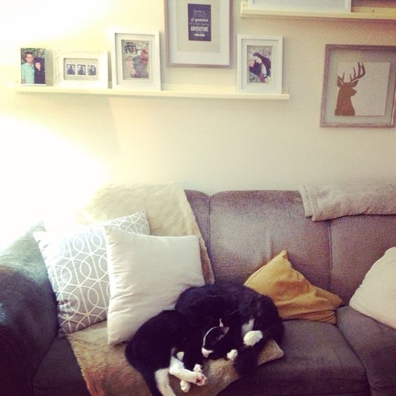 Cats on the couch with picture frame rails