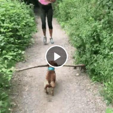 Cão lenhador