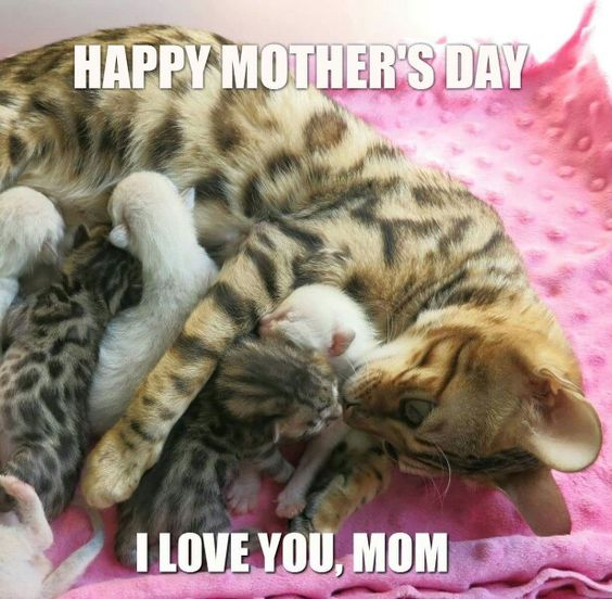 HAPPY MOTHER'S DAY:):):)