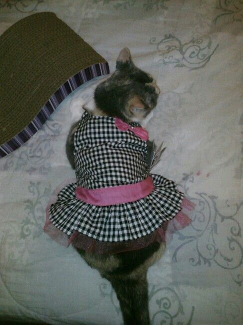 Sprinkles.  Cats in clothes are cute.