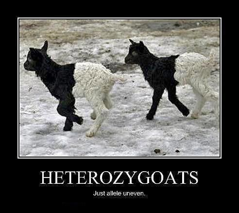 science memes   science memes   Tumblr