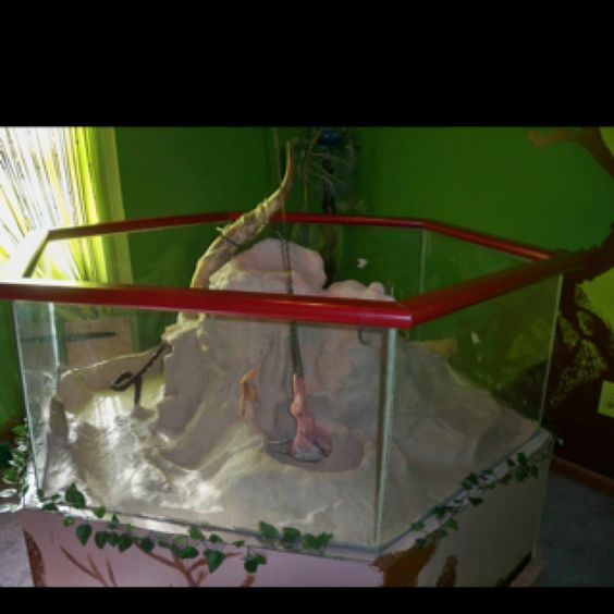 Tank and reptile room