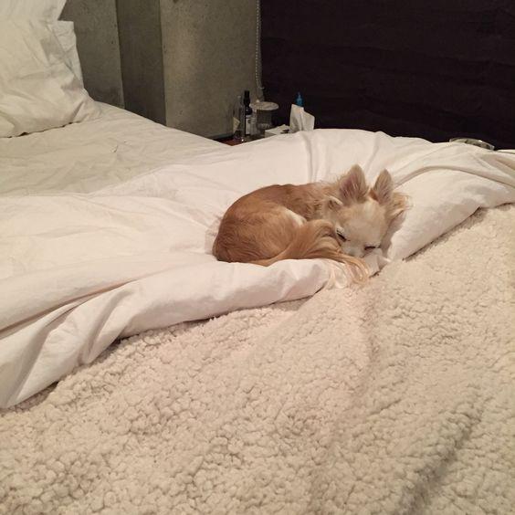 kuri occupoed my bed...