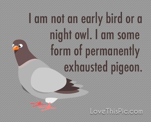 I Am Not An Early Bird Funny Quotes Quote Fun Jokes Tired Funny Quotes Humor Haha Funny Life Quotes Tired Quotes Funny Funny Quotes About Life Funny Quotes