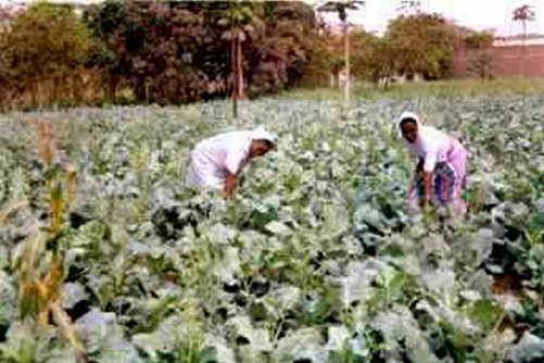 Angola-Gemüse-Anbau_1
