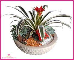 Resultado de imagem para plantas ornamentais