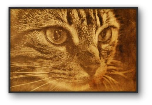 Photo of cat engraved on wood in box frame - Unique gift for pet owners