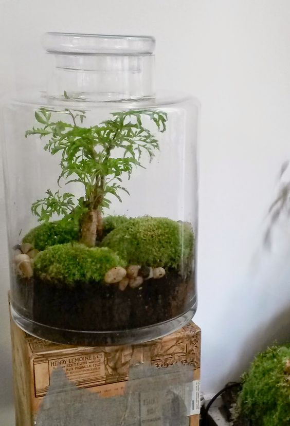 factories green and terrarium on pinterest. Black Bedroom Furniture Sets. Home Design Ideas
