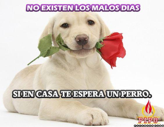 NO EXISTEN LOS DIAS MALOS...