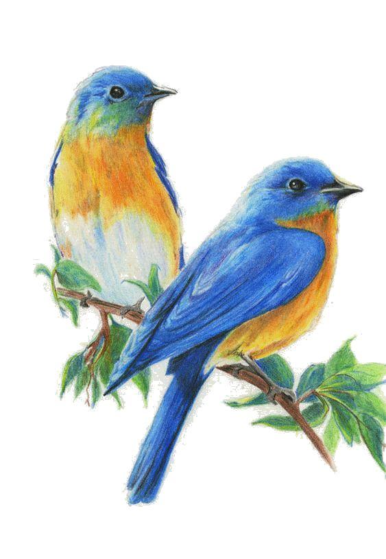 Tubes - gifs oiseaux