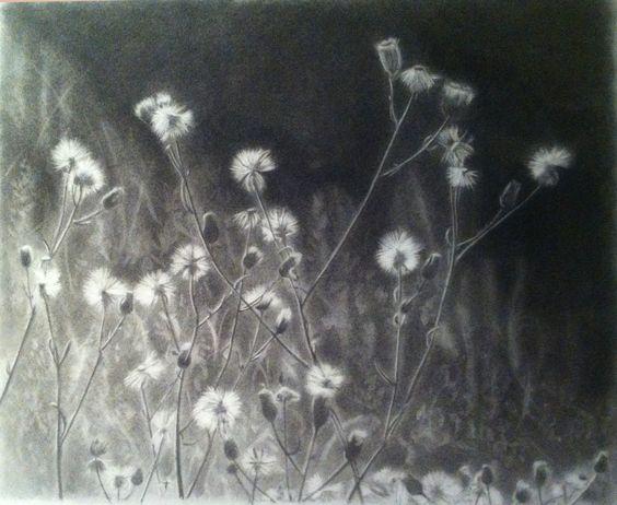 flora nativa chilena carboncillo sobre papel