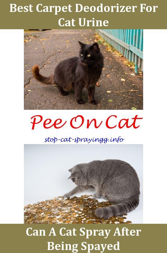 Cat Spray Furniture Cat Spray Cat Peeing In House Cat Pee