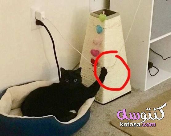 صور مربكة عندما تلجأ القطط إلى الفوضى 2020 Paper Shopping Bag Decor Home Decor