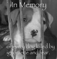 In Memory of every dog killed by ignorance and fear. So sad but so true. It breaks my heart :(