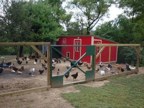 for Duck house door size