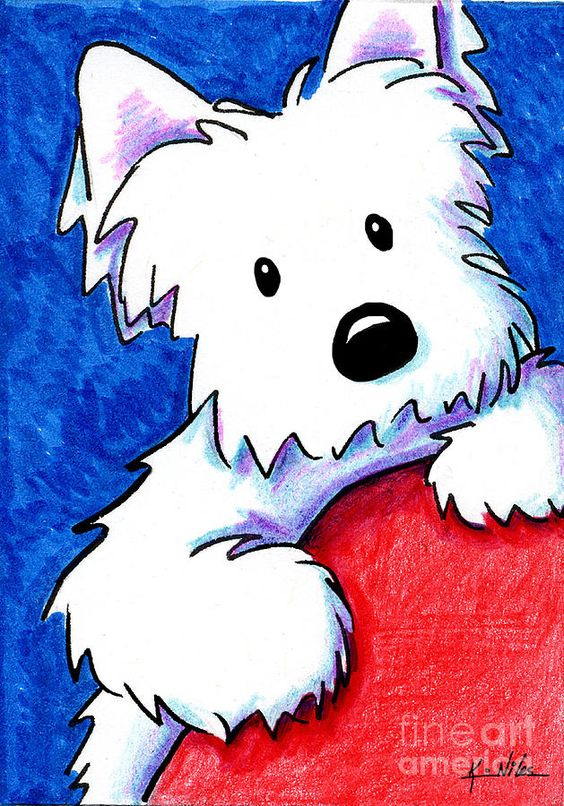 Wendell The Westie Drawing by Kim Niles