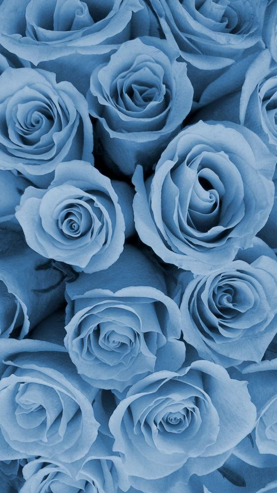 Sakura On Twitter Blue Roses Wallpaper Baby Blue Aesthetic Blue Aesthetic Pastel