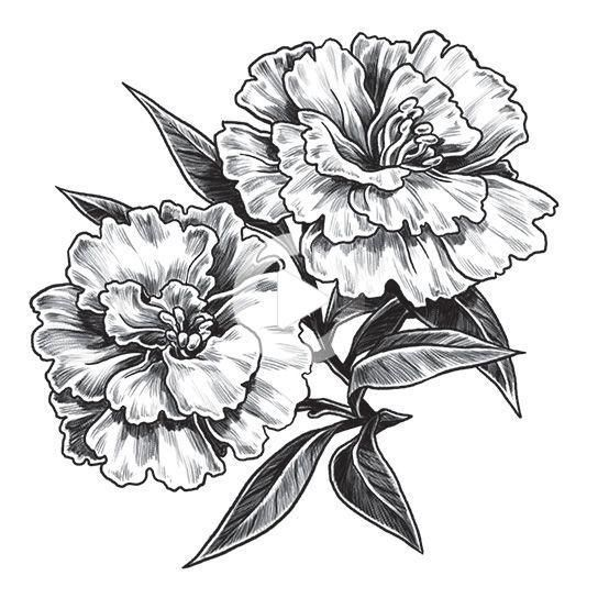 Carnation Temporary Tattoo In 2020 Flower Tattoo Shoulder Birth Flower Tattoos Carnation Flower Tattoo