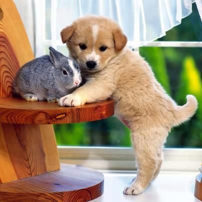 Cute Small Fluffy Dogs Small fluffy rabbit and dog