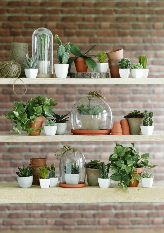 Quelles plantes grasses d'intérieur choisir?