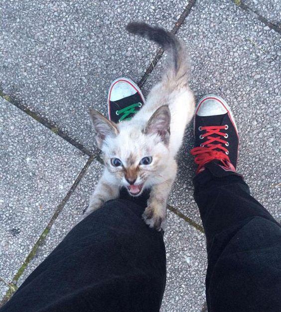 Gata abandonada escolhe seu novo dono após segui-lo em um parque >>http://omascote.com.br/03/gata-abandonada-escolhe-seu-novo-dono-apos-segui-lo-em-um-parque/