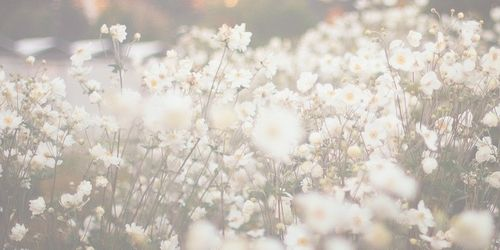 daisy header | Tumblr