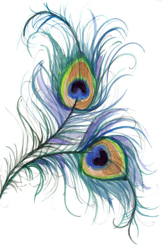 Line Drawing Peacock : Peacock line drawings pinterest beautiful