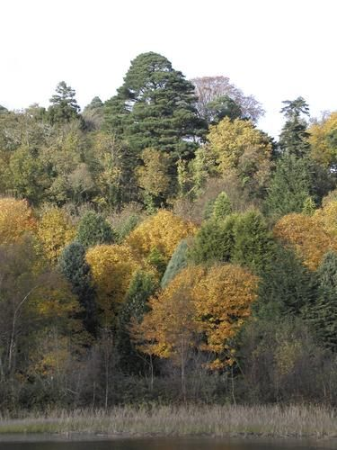 Castlewellan Forest Park, County Down.