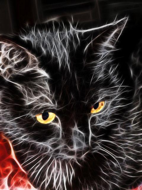 Fractal Shadow Cat.