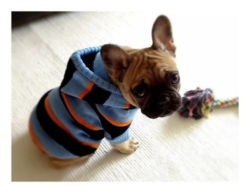 Hello mr. frenchie in your handsome hoody!! #frenchbulldog