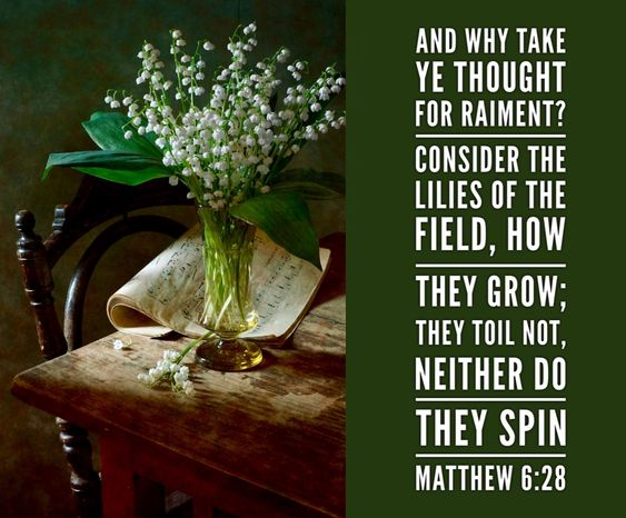 """And why take ye thought for raiment? Consider the lilies of the field, how they grow; they toil not, neither do they spin. Matthew 6:28"