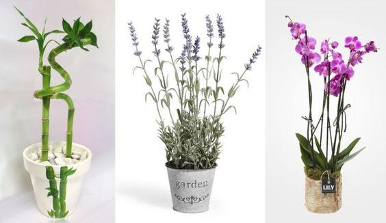 Además de usarlo para decorar tu hogar, algunas de las plantas se pueden utilizar para mejorar el estado de energía positiva del hogar. Puede reducir el...