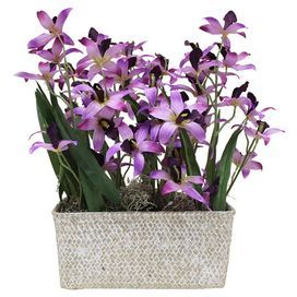 """Faux orchid centerpiece with natural moss in a whitewashed basket.  Product: Faux floral arrangementConstruction Material: Silicone and twigColor: MultiFeatures:  Avoid sunlight and humidityDesigned with faux orchids and natural moss Dimensions: 15"""" H x 13"""" W x 9"""" DCleaning and Care: Wipe gently with a dry cloth"""