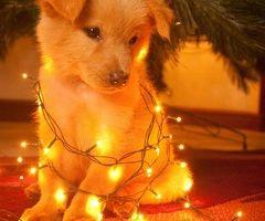 natalino tumblr -