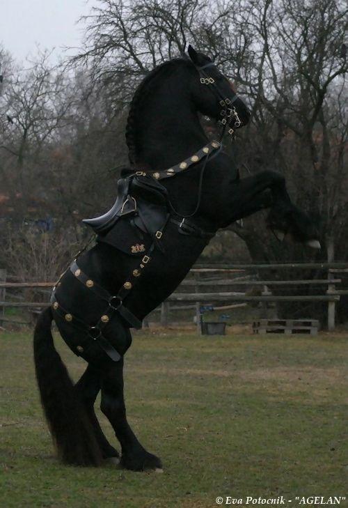 Aaron's Horse ~ ღ Skuwandi