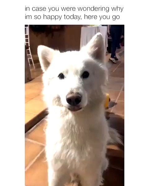 Insane Hilarious Dog Memes Dog Meme Old Man Profile Picture Funny Animal Videos Cute Baby Animals Cute Animals