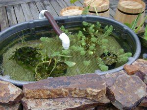 Top Of Biological Pond Filter Koi Fish Stock Tank Pinterest Tops Ponds And Build Your Own